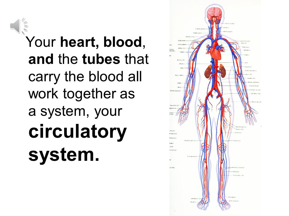 Your heart, blood, and the tubes that carry the blood all work together as a system, your circulatory system.