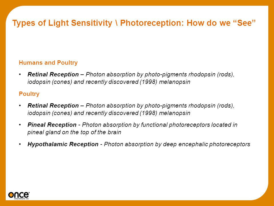 Types of Light Sensitivity \ Photoreception: How do we See