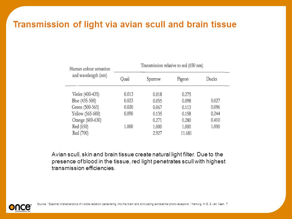 Transmission of light via avian scull and brain tissue