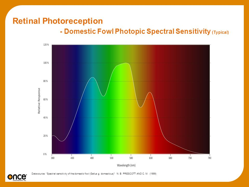 Retinal Photoreception