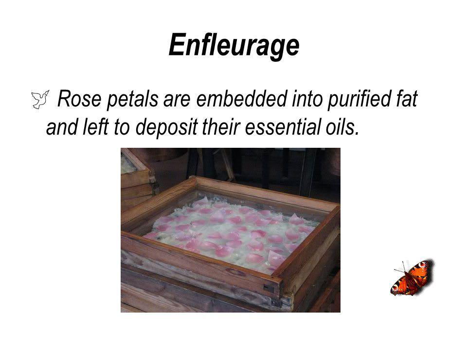 Enfleurage  Rose petals are embedded into purified fat and left to deposit their essential oils.