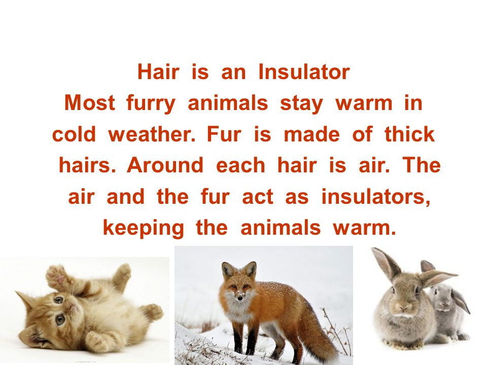 Most furry animals stay warm in cold weather. Fur is made of thick