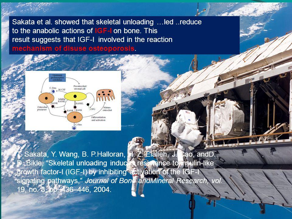 Sakata et al. showed that skeletal unloading …led ..reduce