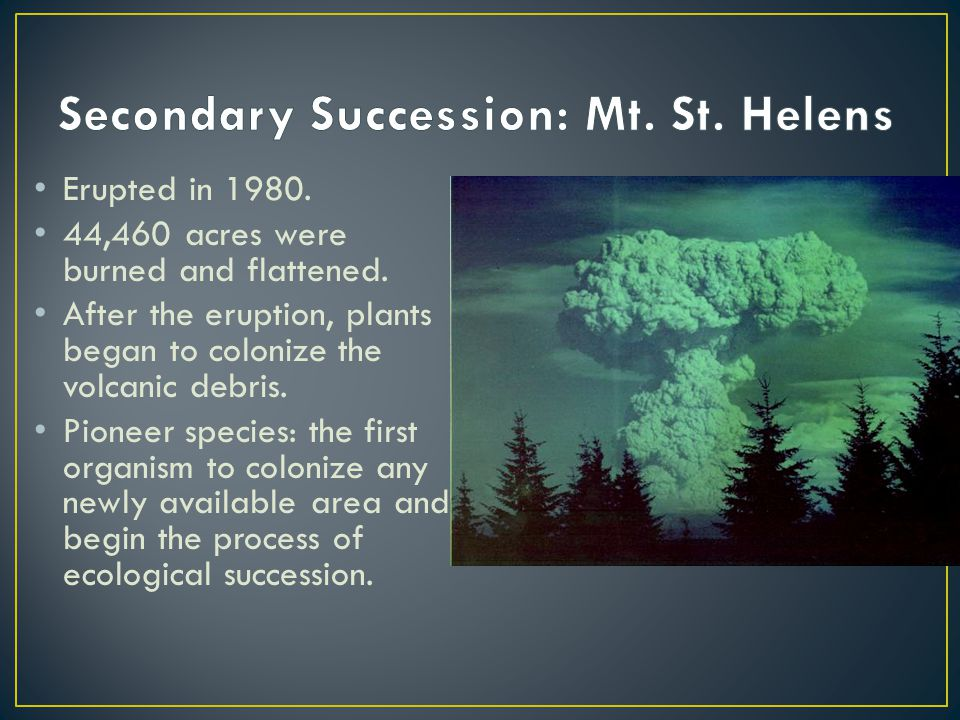 Secondary Succession: Mt. St. Helens