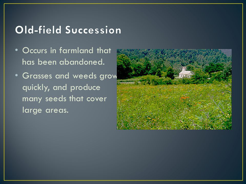 Old-field Succession Occurs in farmland that has been abandoned.