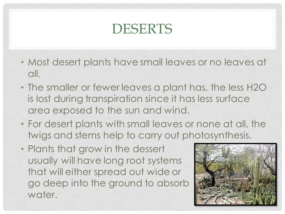Deserts Most desert plants have small leaves or no leaves at all.