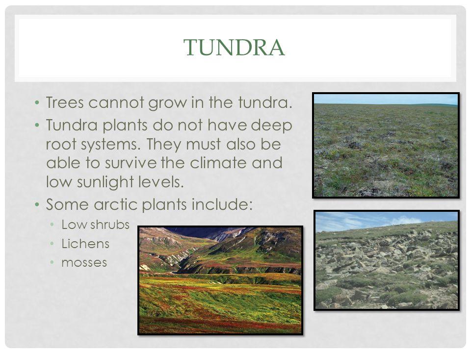 Tundra Trees cannot grow in the tundra.