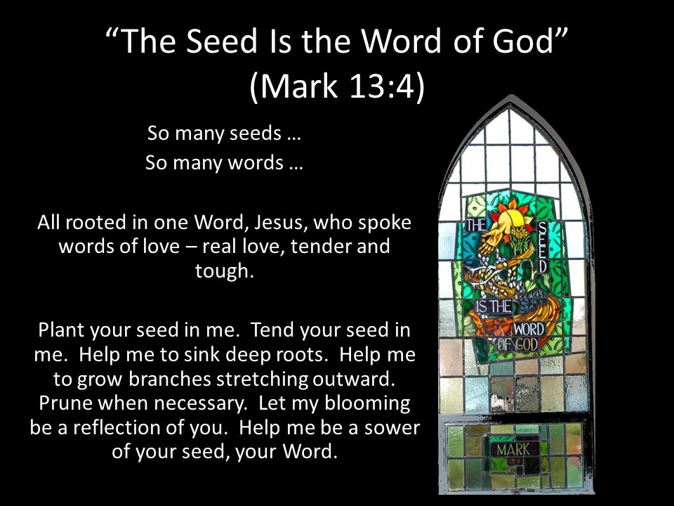 The Seed Is the Word of God (Mark 13:4)