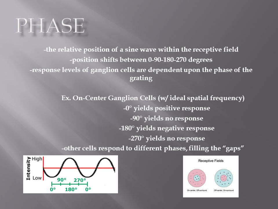 Phase -the relative position of a sine wave within the receptive field