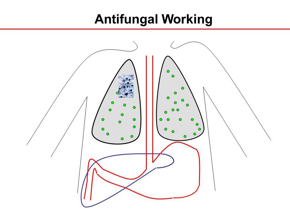 Antifungal Working
