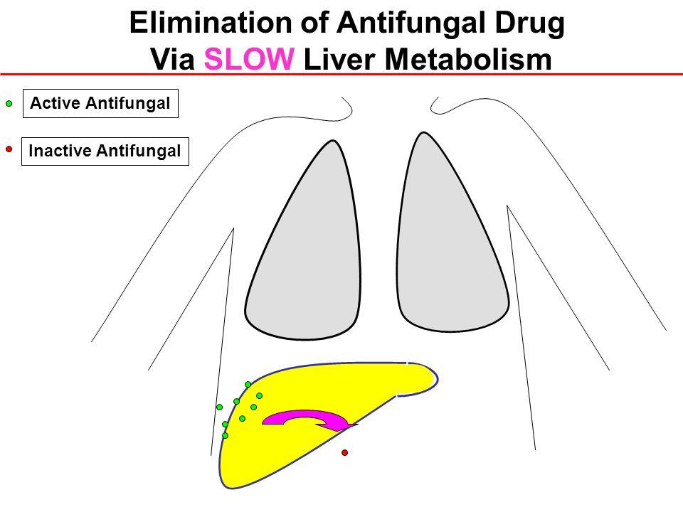 Elimination of Antifungal Drug Via SLOW Liver Metabolism