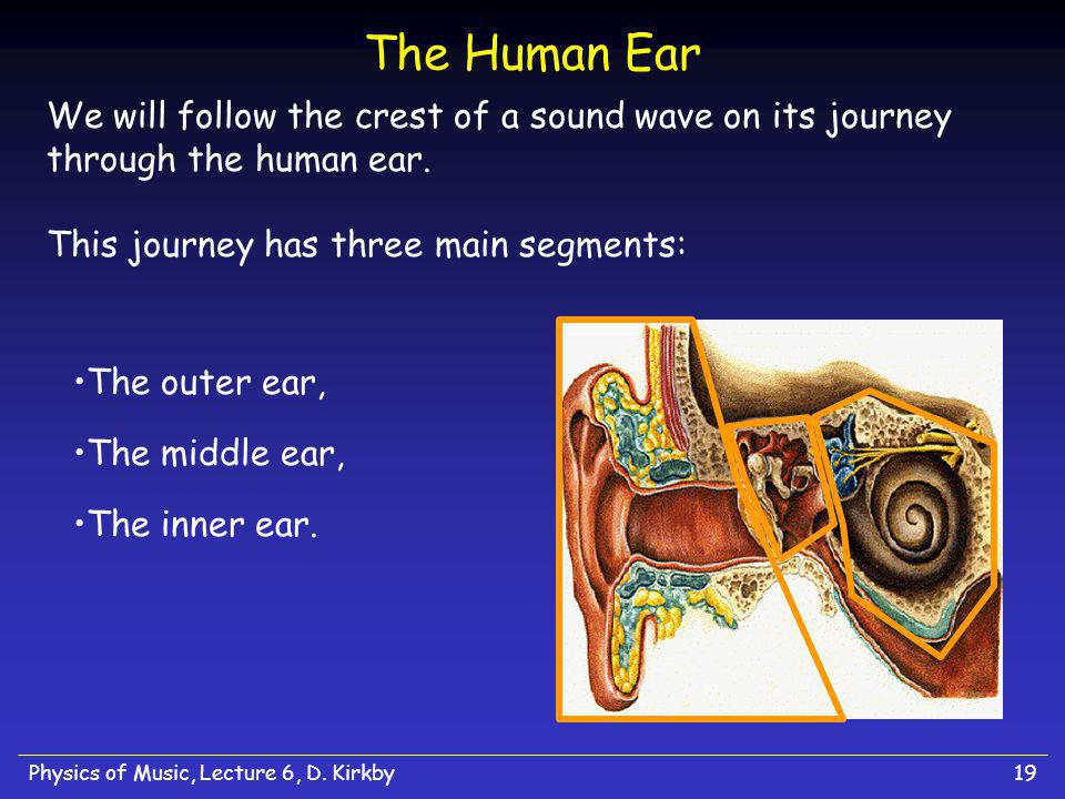 The Human Ear We will follow the crest of a sound wave on its journey through the human ear. This journey has three main segments: