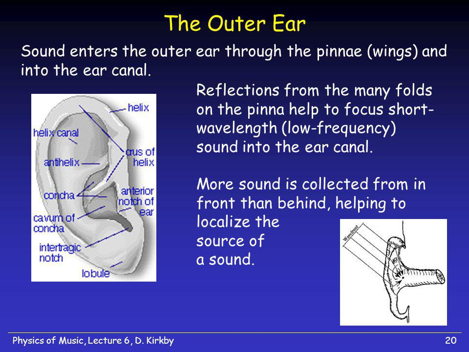The Outer Ear Sound enters the outer ear through the pinnae (wings) and into the ear canal.