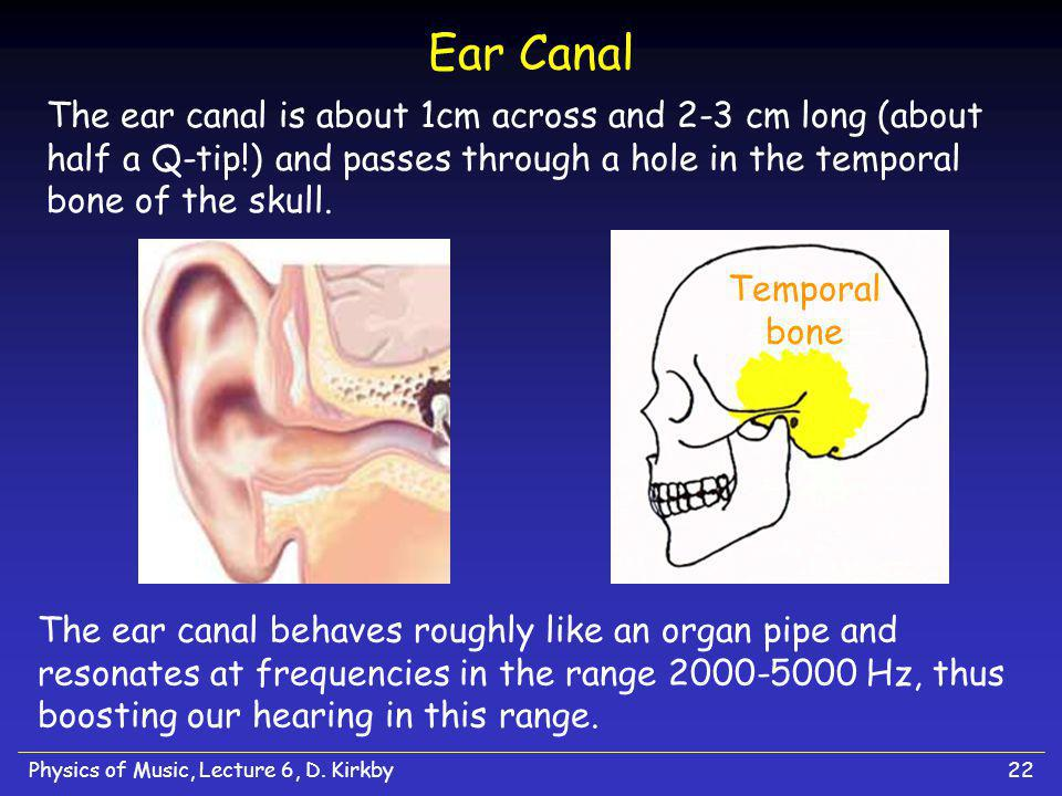 Ear Canal The ear canal is about 1cm across and 2-3 cm long (about half a Q-tip!) and passes through a hole in the temporal bone of the skull.