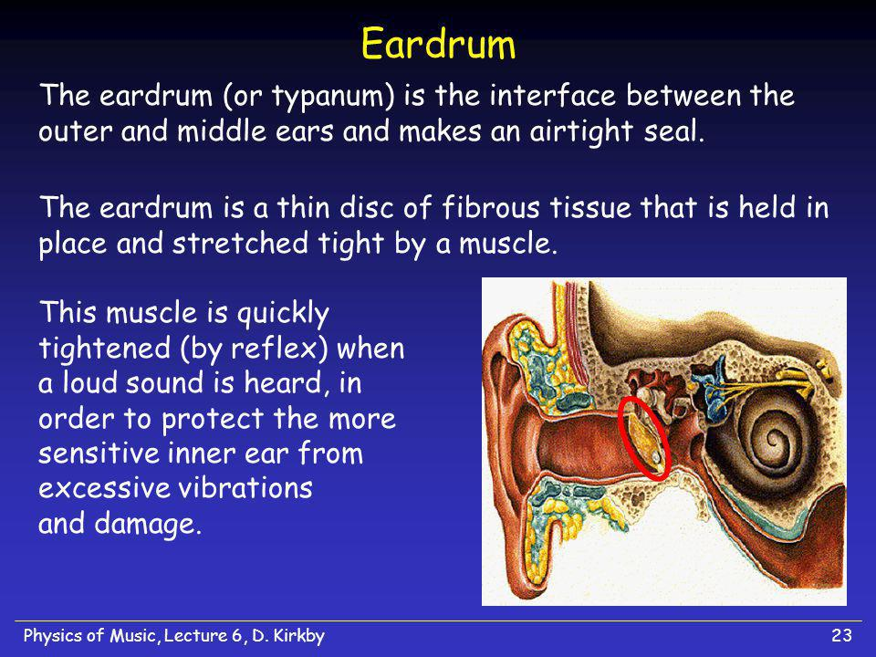 Eardrum The eardrum (or typanum) is the interface between the outer and middle ears and makes an airtight seal.