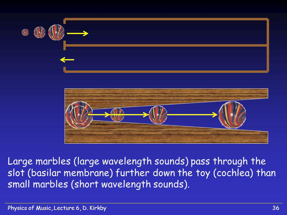 Large marbles (large wavelength sounds) pass through the slot (basilar membrane) further down the toy (cochlea) than small marbles (short wavelength sounds).