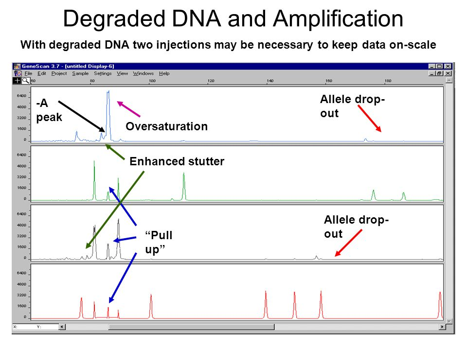 Degraded DNA and Amplification