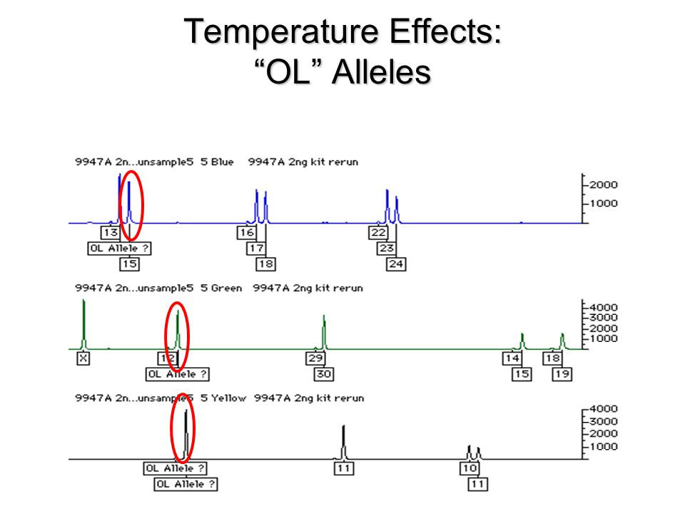 Temperature Effects: OL Alleles