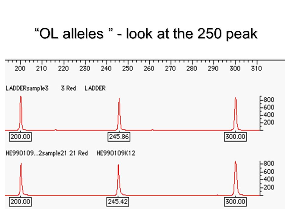 OL alleles - look at the 250 peak