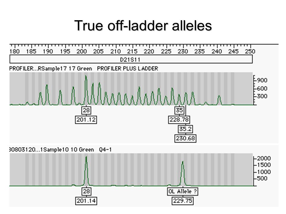 True off-ladder alleles