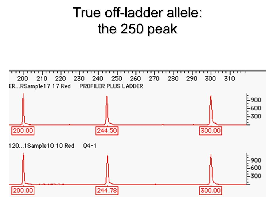 True off-ladder allele: the 250 peak