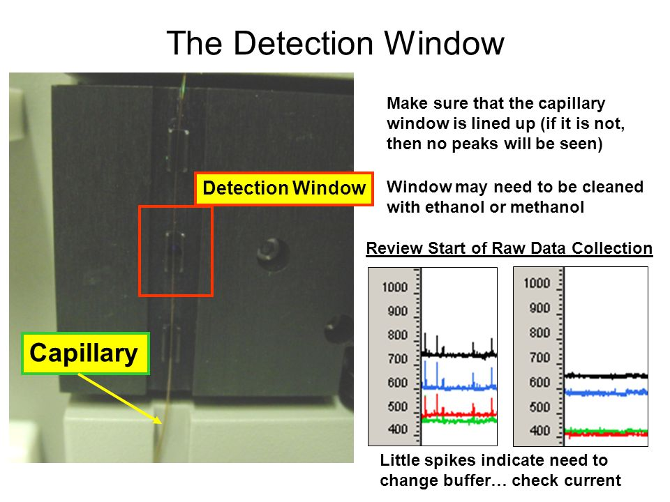 The Detection Window Capillary Detection Window
