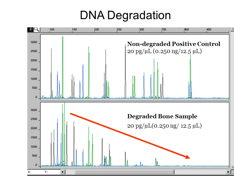 DNA Degradation Non-degraded Positive Control