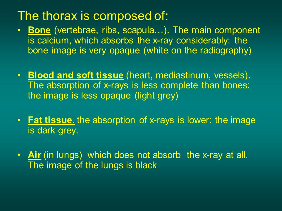 The thorax is composed of: