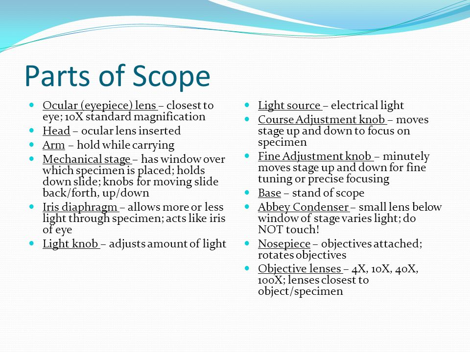 Parts of Scope Ocular (eyepiece) lens – closest to eye; 10X standard magnification. Head – ocular lens inserted.