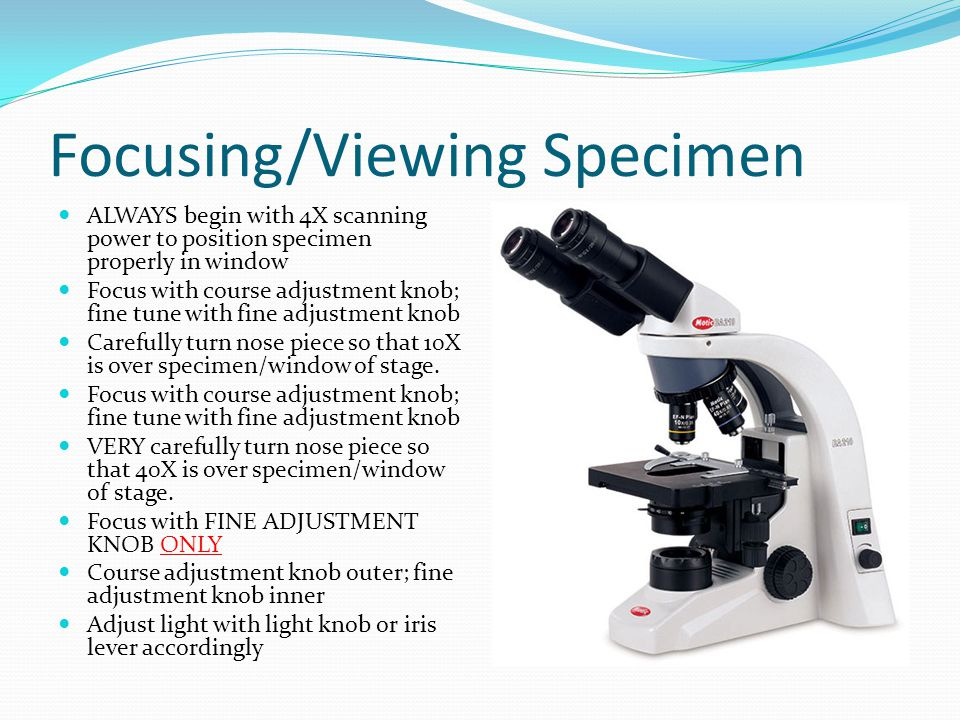 Focusing/Viewing Specimen