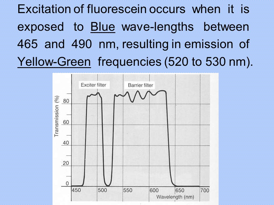 Excitation of fluorescein occurs when it is