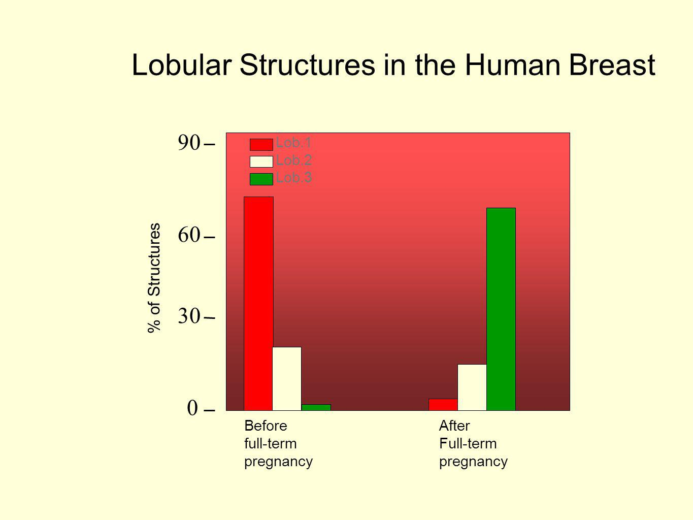 Lobular Structures in the Human Breast