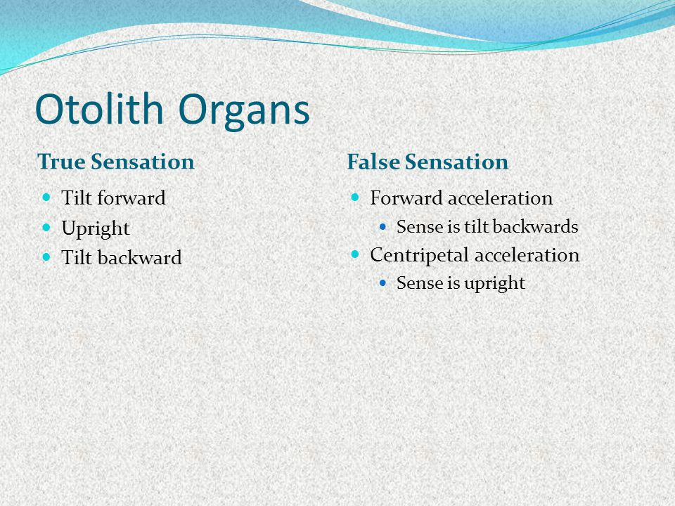 Otolith Organs True Sensation False Sensation Tilt forward Upright