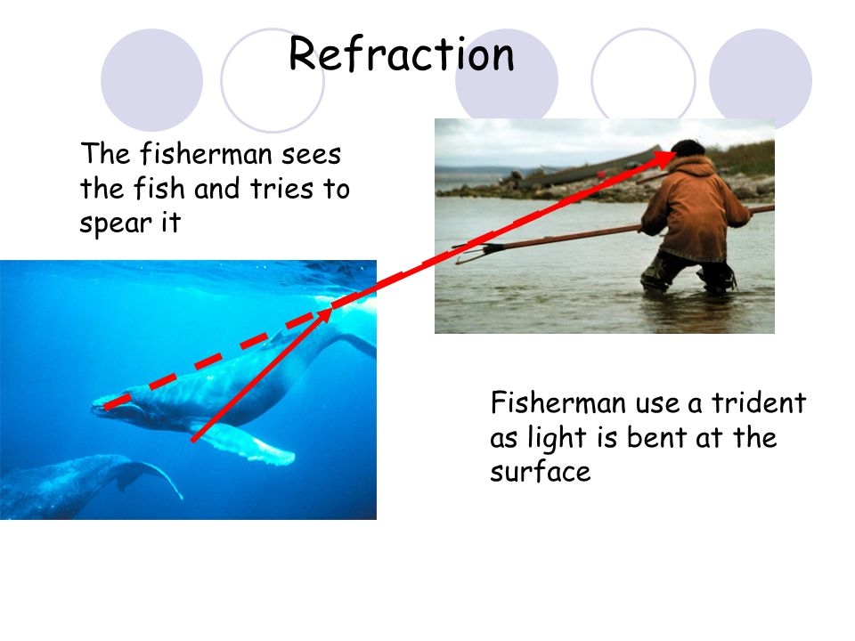 Refraction The fisherman sees the fish and tries to spear it