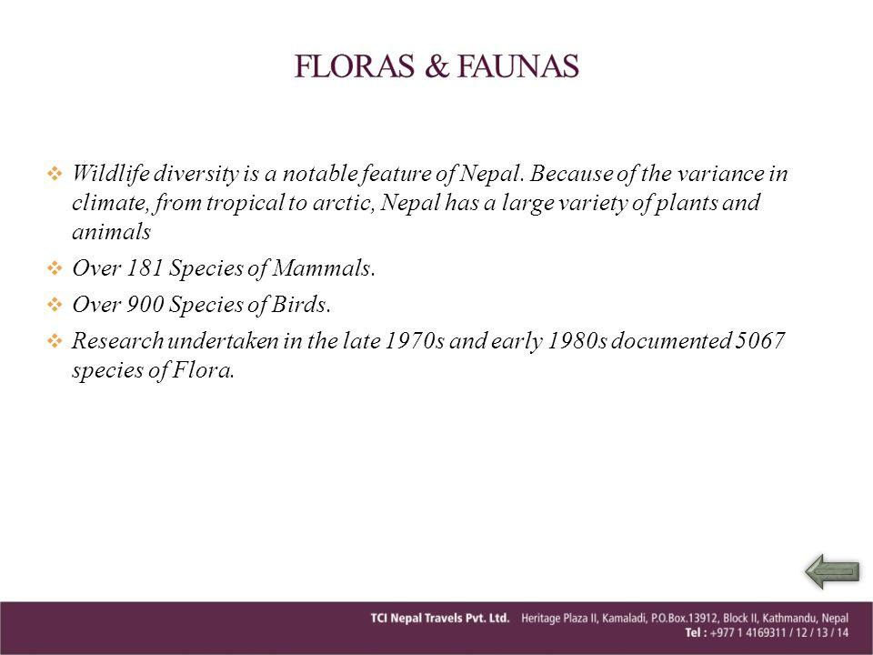 FLORAS & FAUNAS