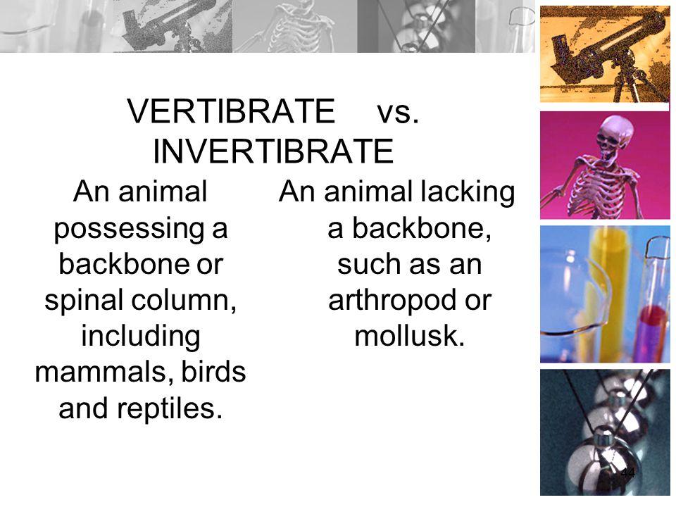 VERTIBRATE vs. INVERTIBRATE