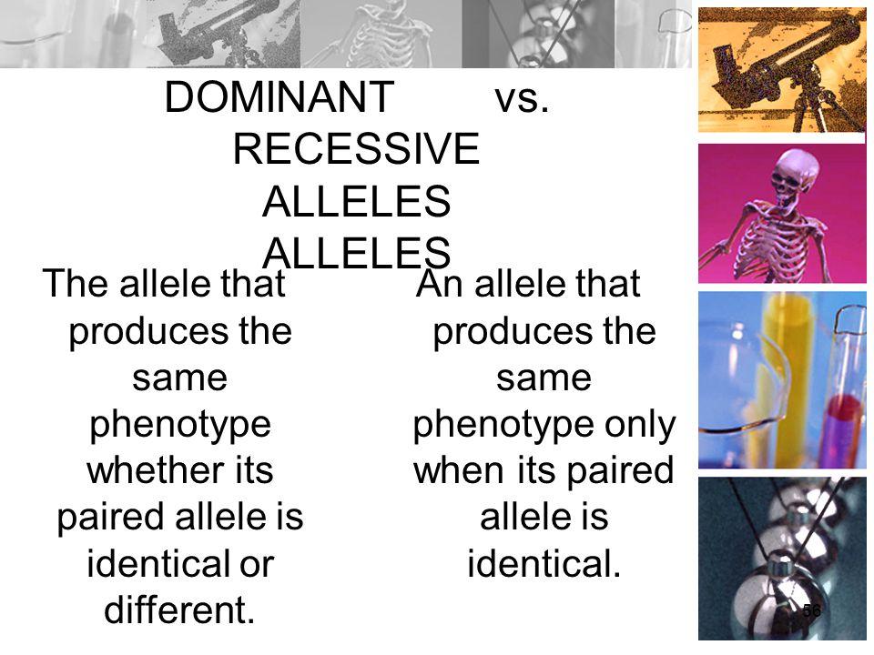 DOMINANT vs. RECESSIVE ALLELES ALLELES