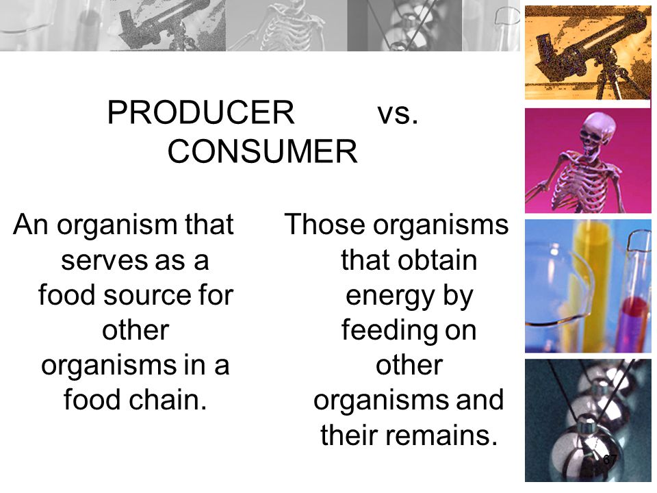PRODUCER vs. CONSUMER An organism that serves as a food source for other organisms in a food chain.