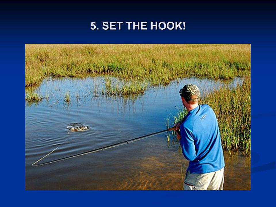 5. SET THE HOOK!