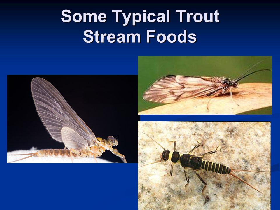 Some Typical Trout Stream Foods