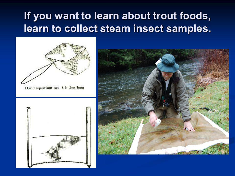 If you want to learn about trout foods, learn to collect steam insect samples.