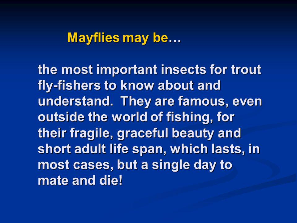 Mayflies may be… the most important insects for trout fly-fishers to know about and understand.