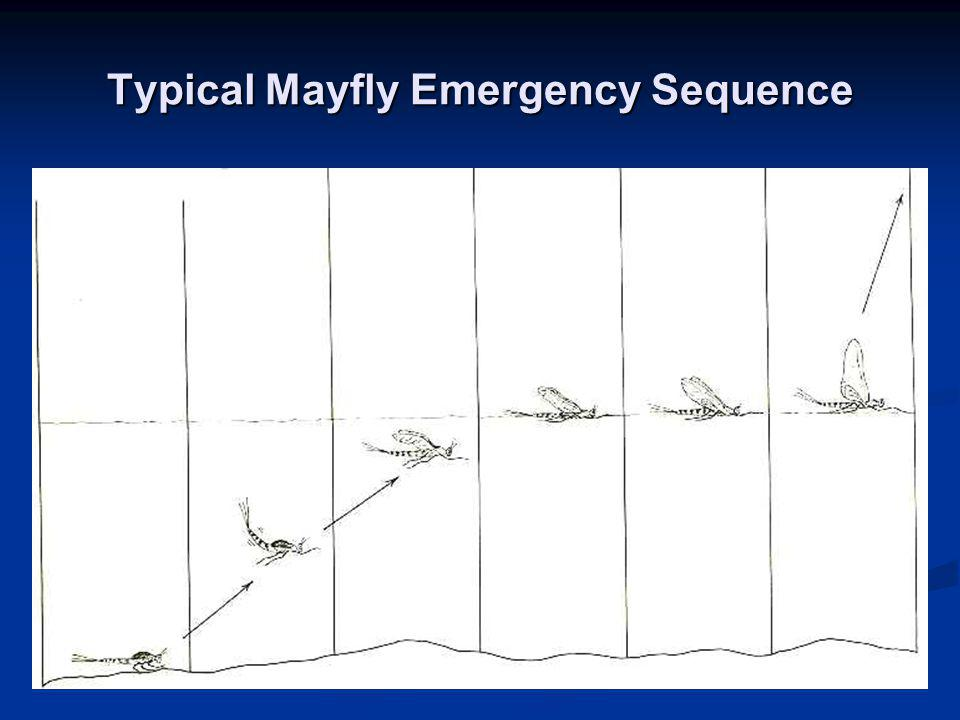 Typical Mayfly Emergency Sequence