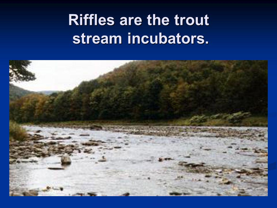 Riffles are the trout stream incubators.