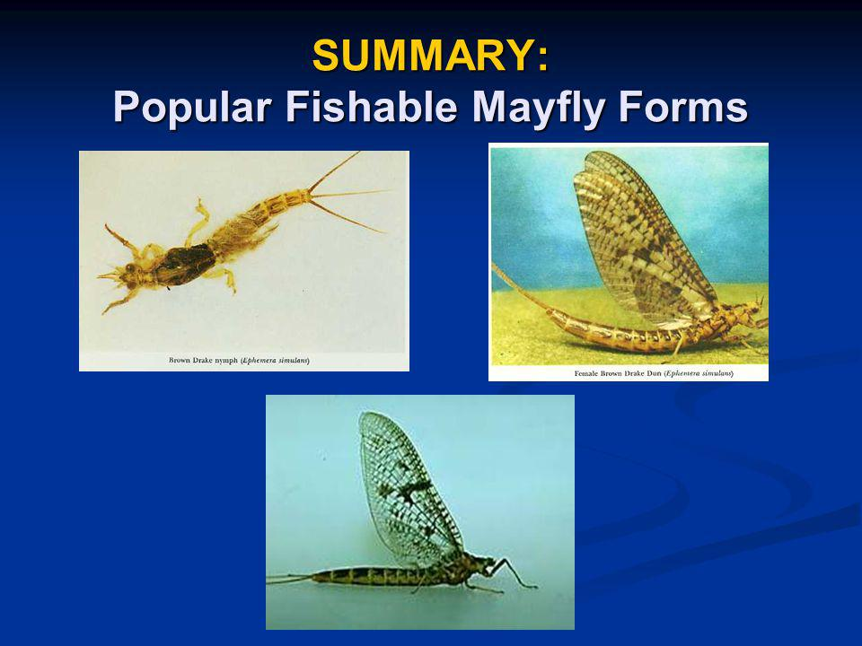 SUMMARY: Popular Fishable Mayfly Forms