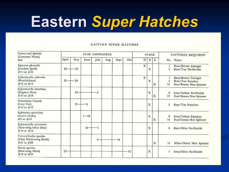 Eastern Super Hatches