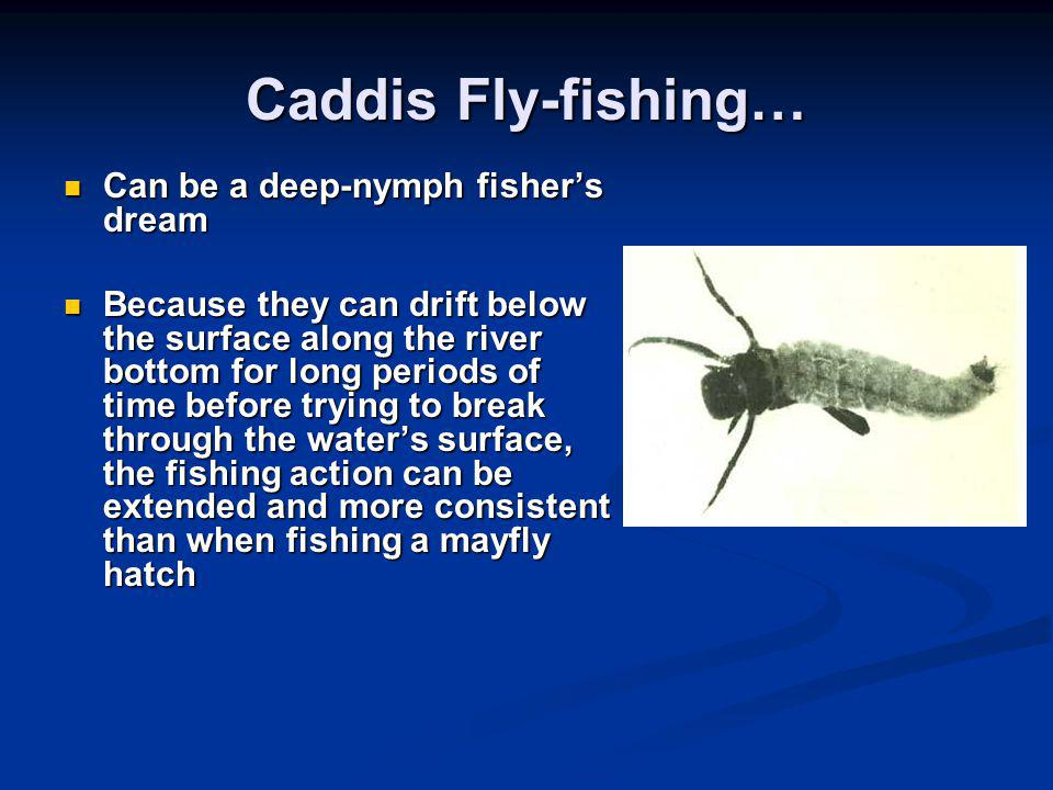 Caddis Fly-fishing… Can be a deep-nymph fisher's dream