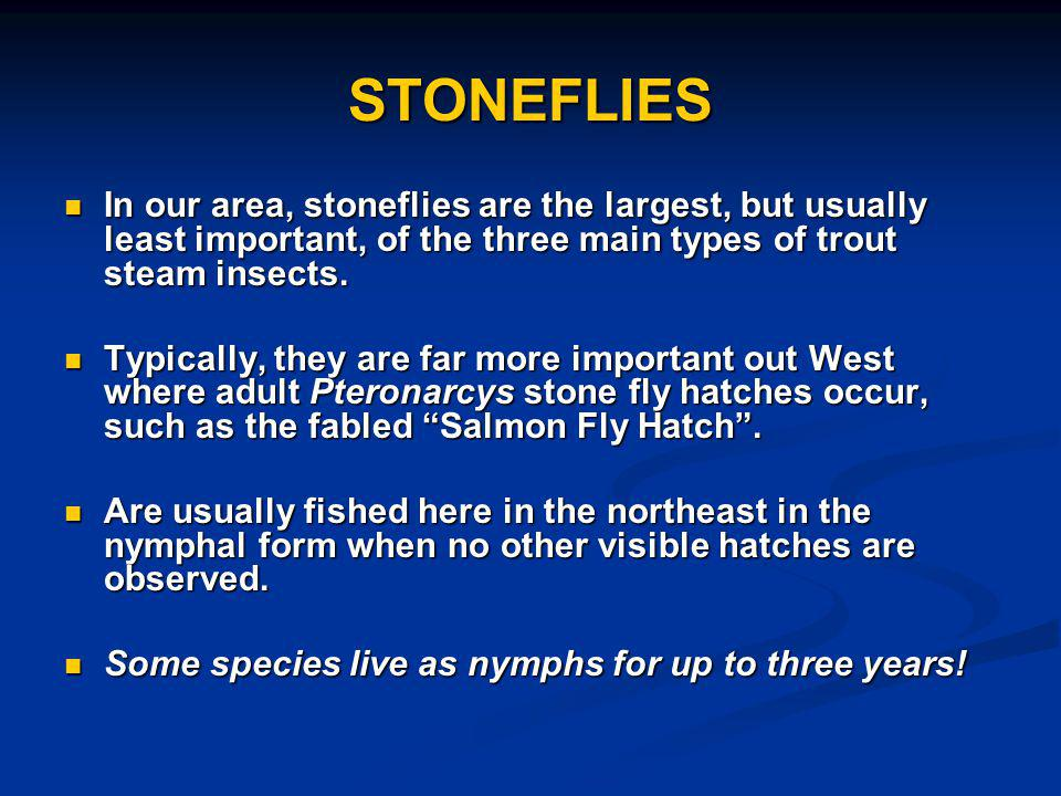 STONEFLIES In our area, stoneflies are the largest, but usually least important, of the three main types of trout steam insects.
