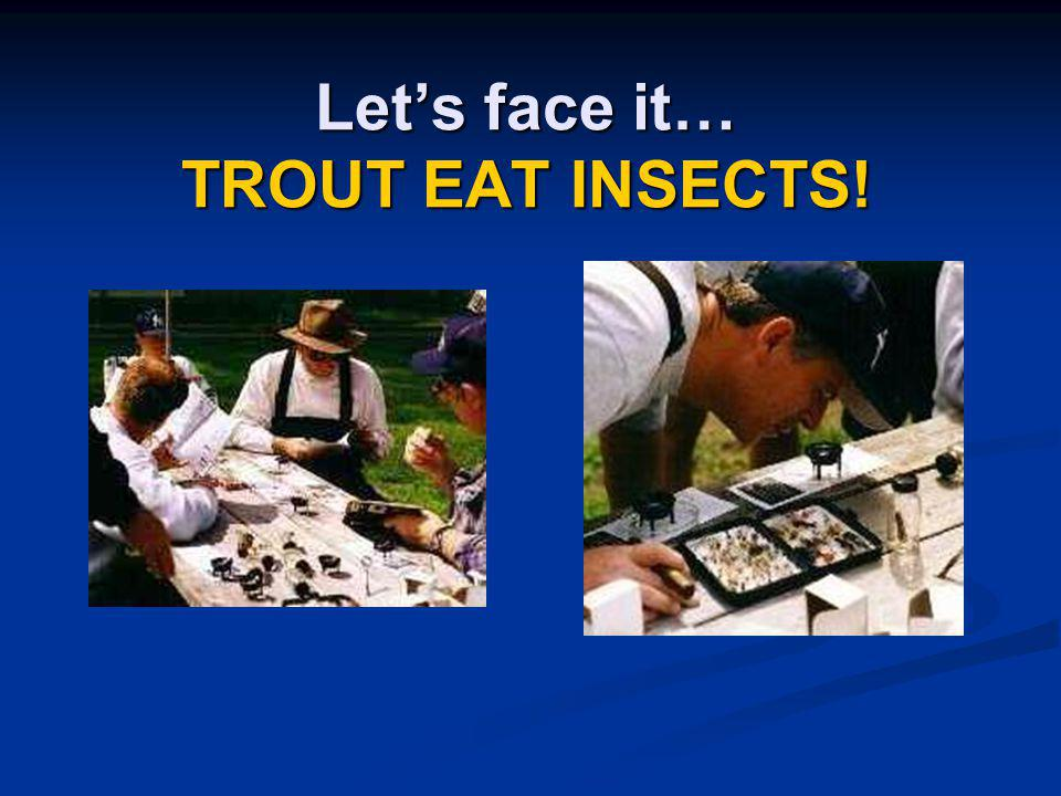 Let's face it… TROUT EAT INSECTS!