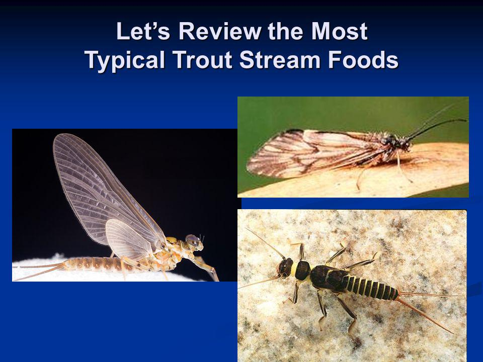 Let's Review the Most Typical Trout Stream Foods